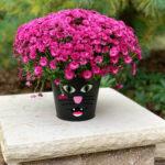 alley cat mum plant flower